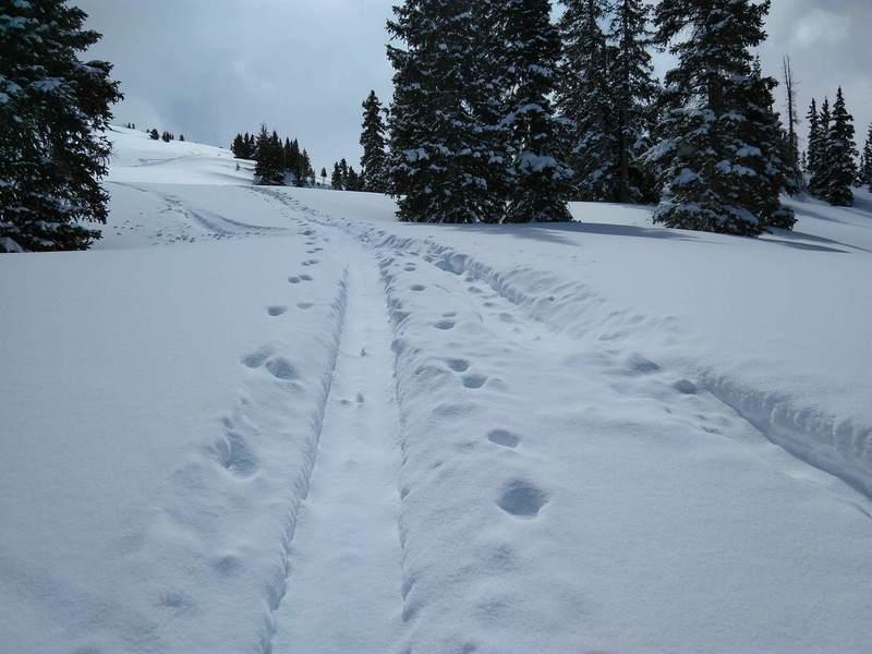 Popular Skin Track up the northwest bowl of McMillian Peak