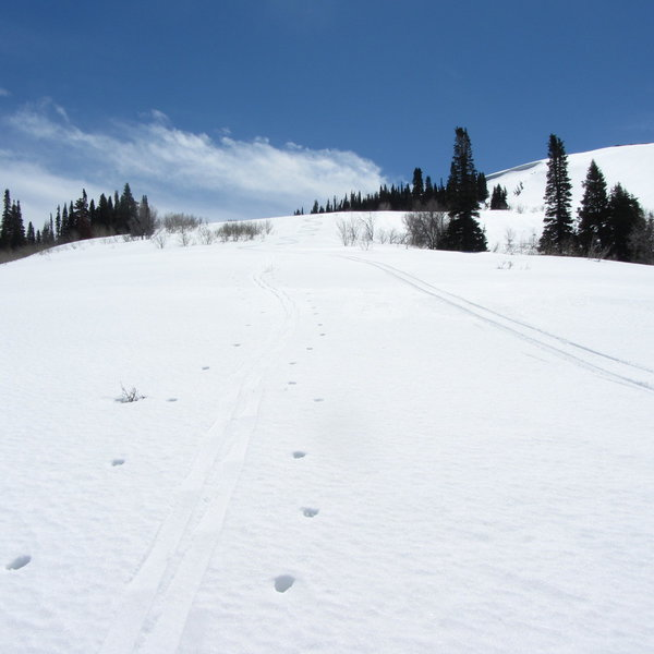 Another small stretch of skiing that can be done while making your way back down Farmington Spine.
