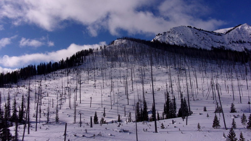 View of Mineral Mountain North Side Burn, looking SW from Sheep Creek, at the bottom of the ski lines