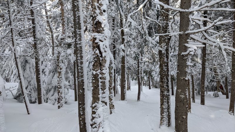 Tree skiing Bretton Woods