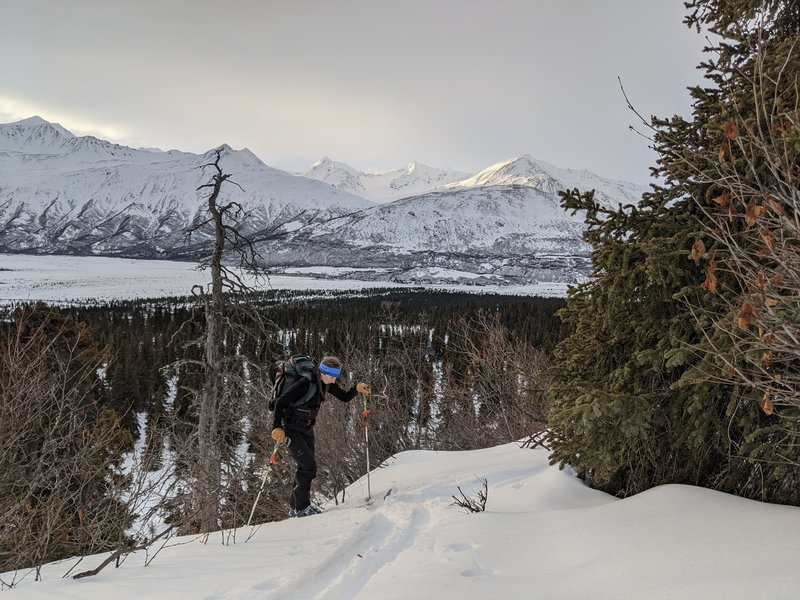 Klara crushes the last steep step in the lower sections of the Devils Thumb Ridge trail. Fleeting January sunlight shine on peaks across the Delta River in the background.