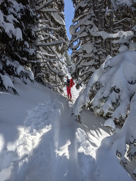 Using thick trees as cover for the steep rollover at the bottom of the Platinum Peak SW face.