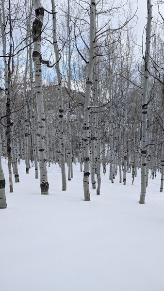 This is the Quaking Aspen section of the run. Ethereal feeling here, and some great turns through the trees on this gentle slope.